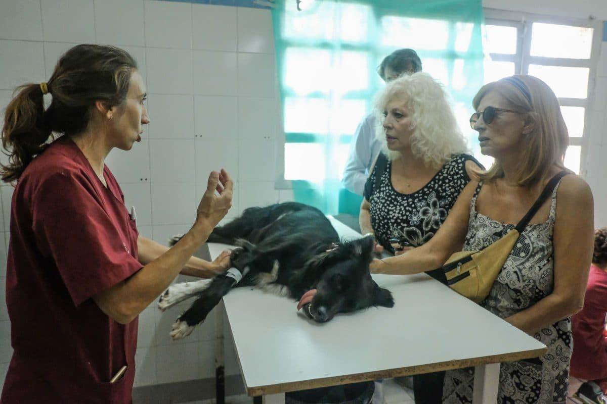 Zoonosis dio en adopción responsable cerca de 80 perros