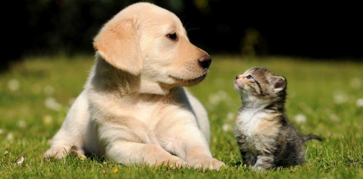 Coronavirus y la situación con los animales