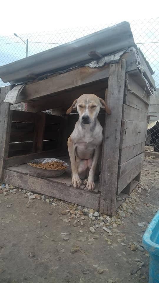 El municipio niega maltrato animal en Zooonosis