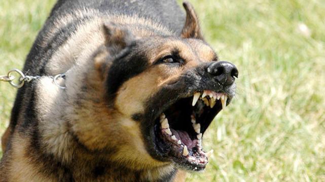 El Municipio asistió a un hombre tras ser mordido por perros y actuó contra sus dueños