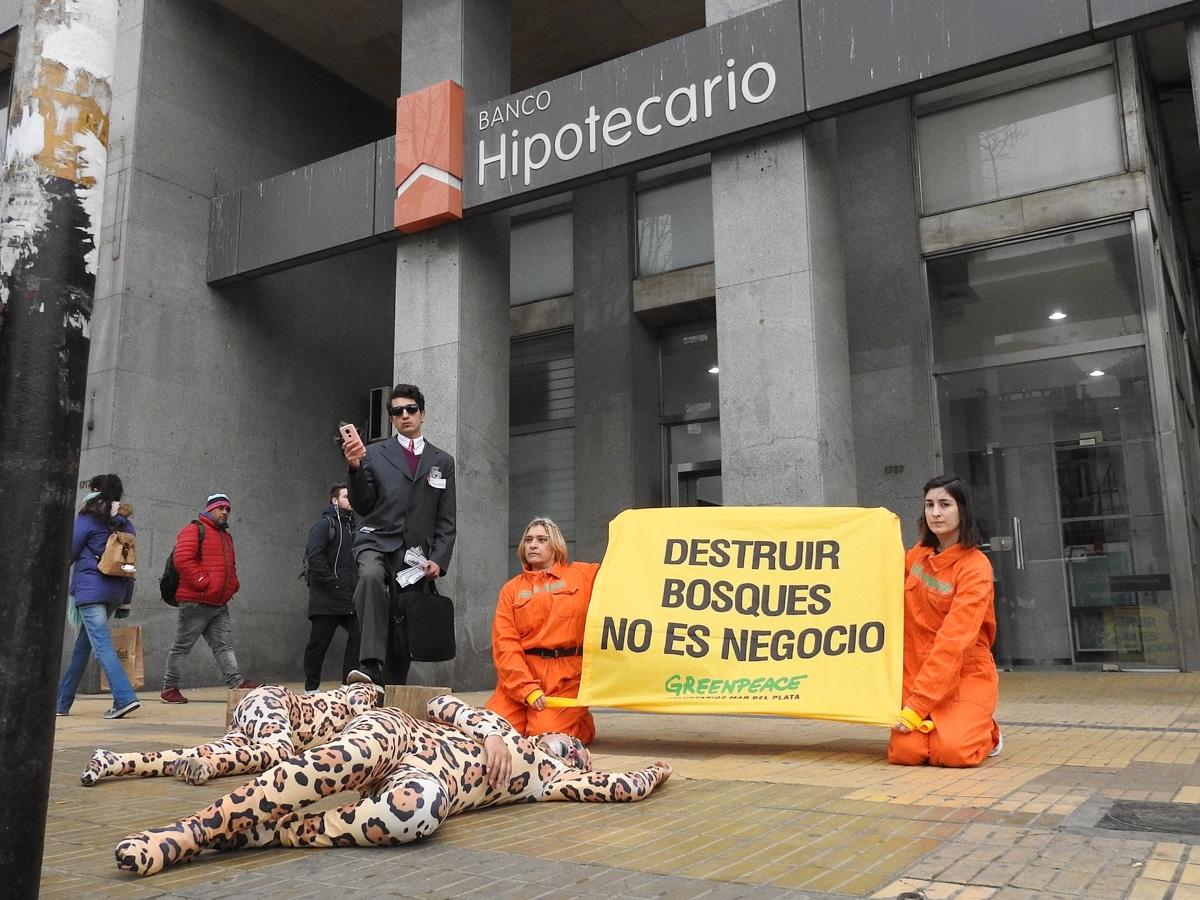 Desde Mar del Plata, Greenpeace exige al Hipotecario que frene el desmonte