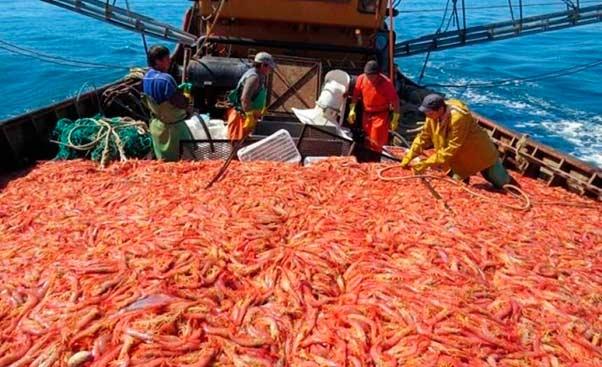Gremios de la pesca se declararon en estado de alerta