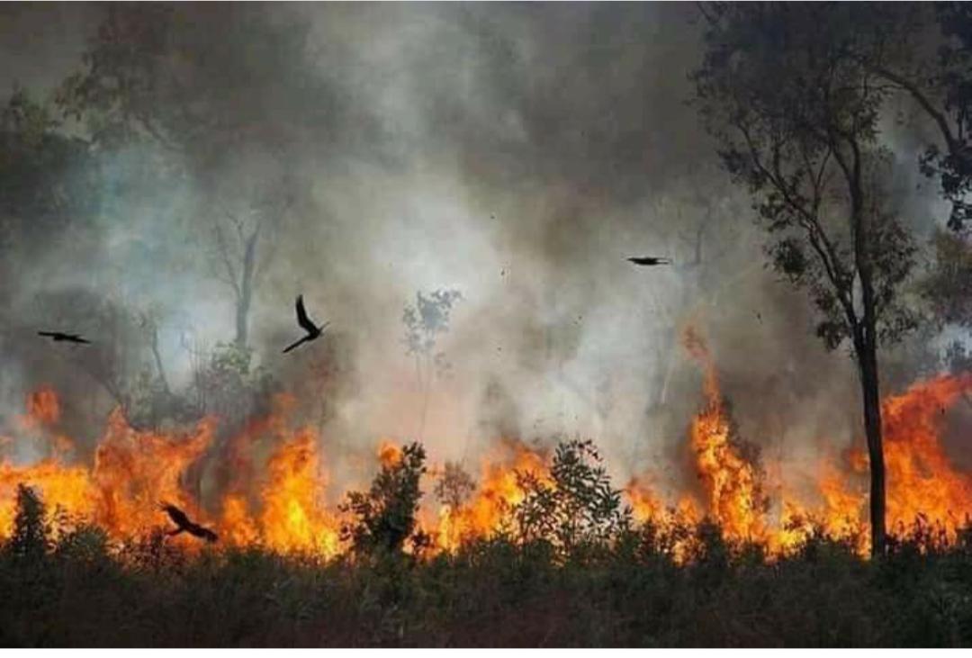 El humo de los incendios de Australia llegó hasta Mar del Plata