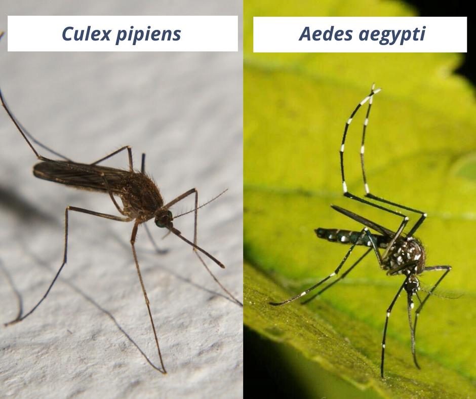 Dengue: aportes de la ciencia marplatense