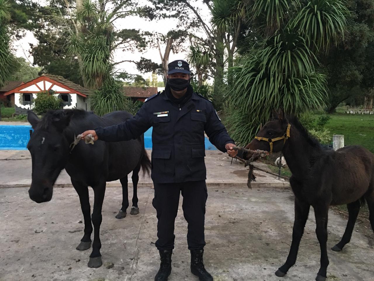 Roban dos caballos, golpean y amenazan al dueño
