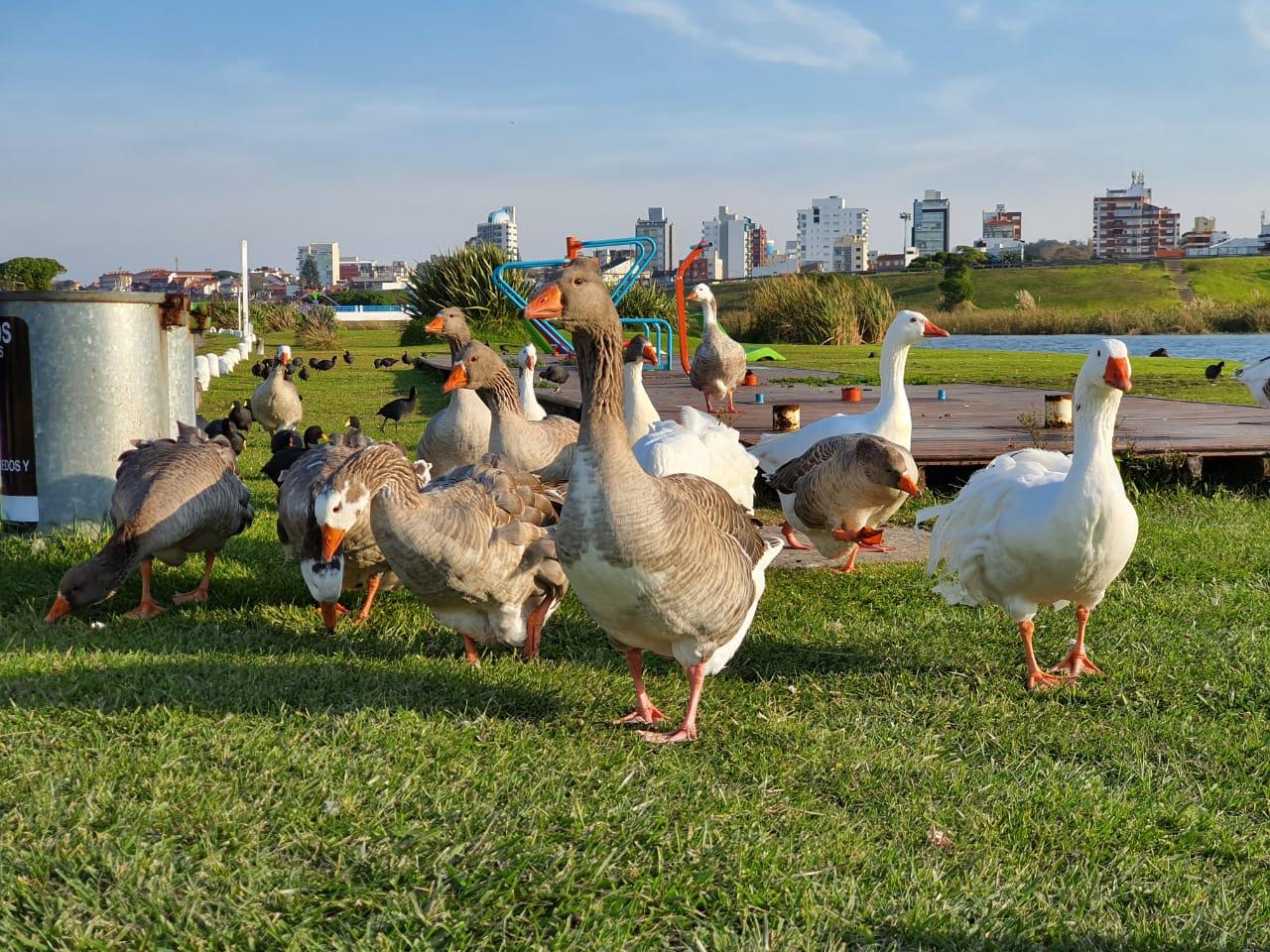 """Las aves """"coparon"""" el sector de lagunas de Punta Mogotes"""