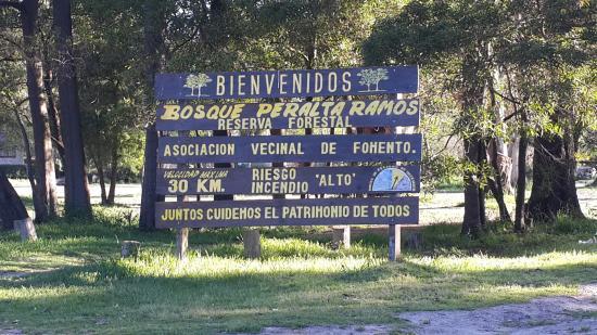 Denuncian tala de árboles en el Bosque Peralta Ramos