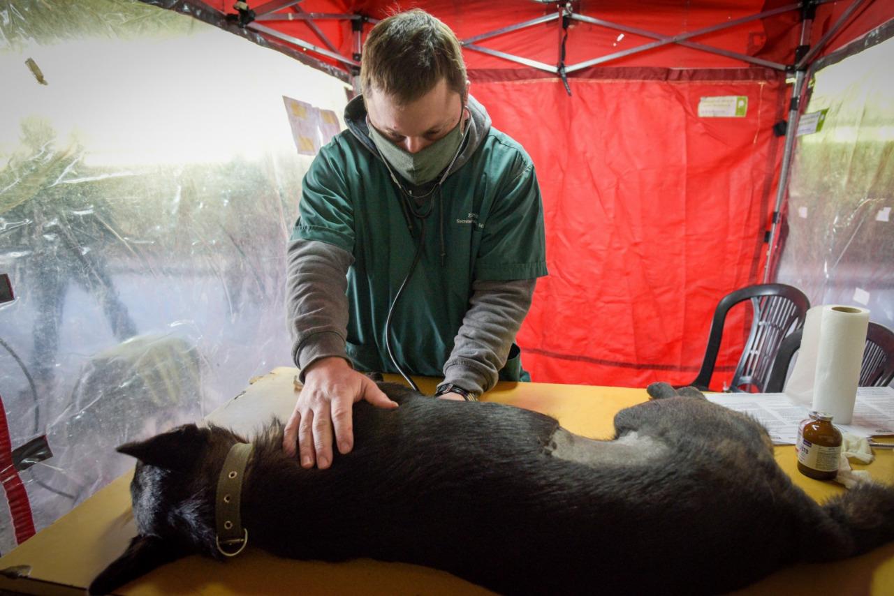 Se reabre la agenda de turnos para la castración de mascotas