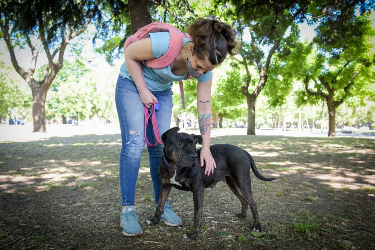 """Alertan sobre la importancia de """"cuidar la sanidad animal para controlar futuras epidemias"""""""