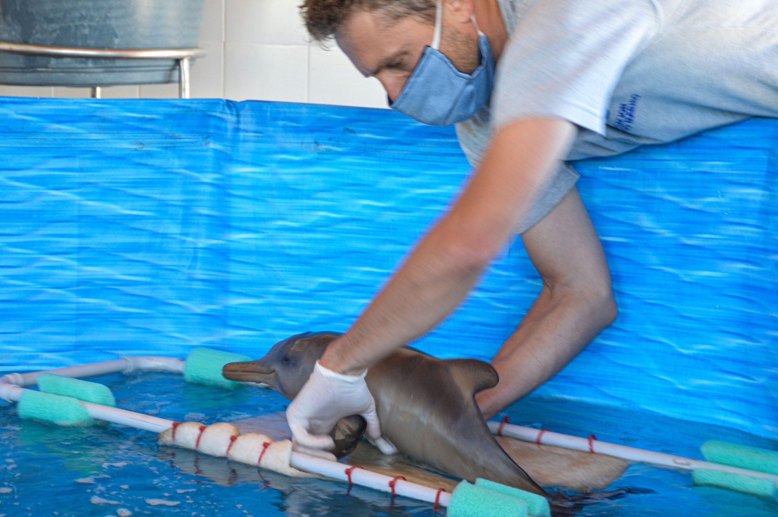 Ante la aparición frecuente de cachorros de delfín franciscana, alertan a los turistas sobre qué hacer en caso de hallarlos