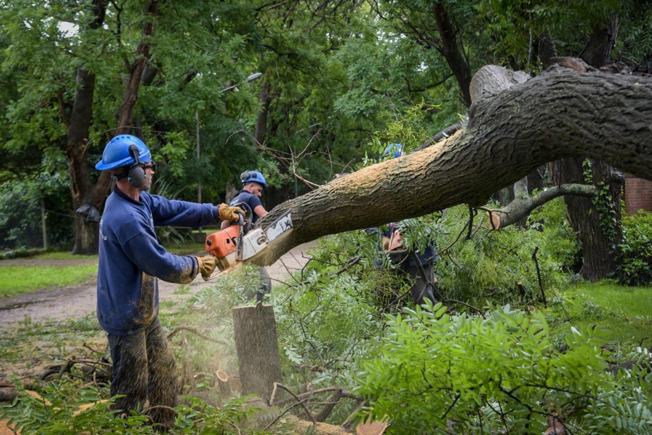 Fuertes vientos provocaron caída de árboles en Mar del Plata