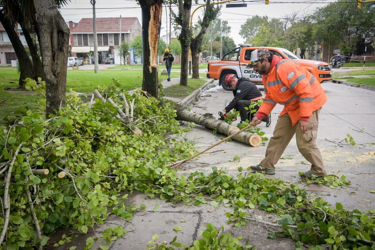 Cesó el alerta meteorológico sin evacuados y con medio centenar de árboles caídos