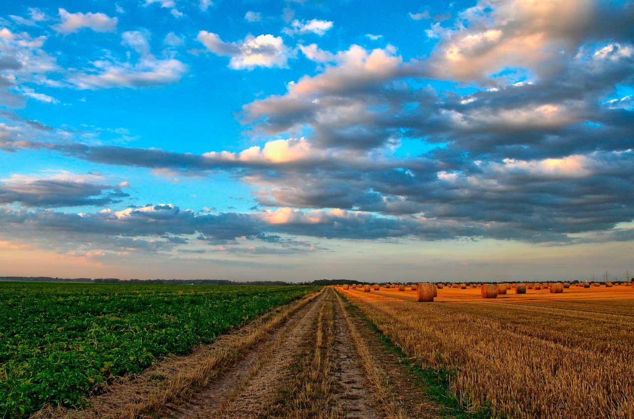 Argentina exportará su novedosa tecnología de silobolsas