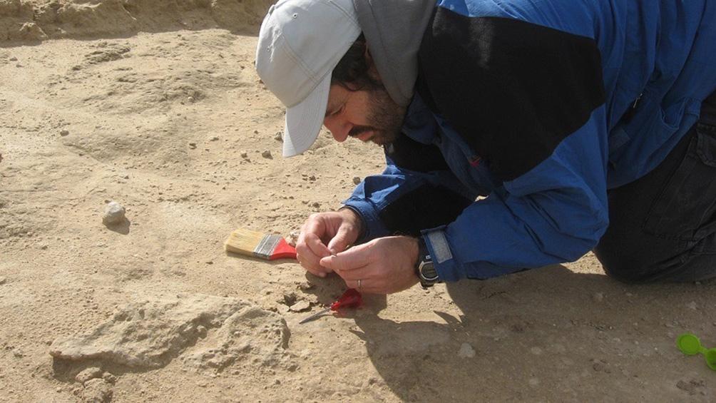 Encuentran fósil de un vampiro extinto en una cueva al sur de Miramar