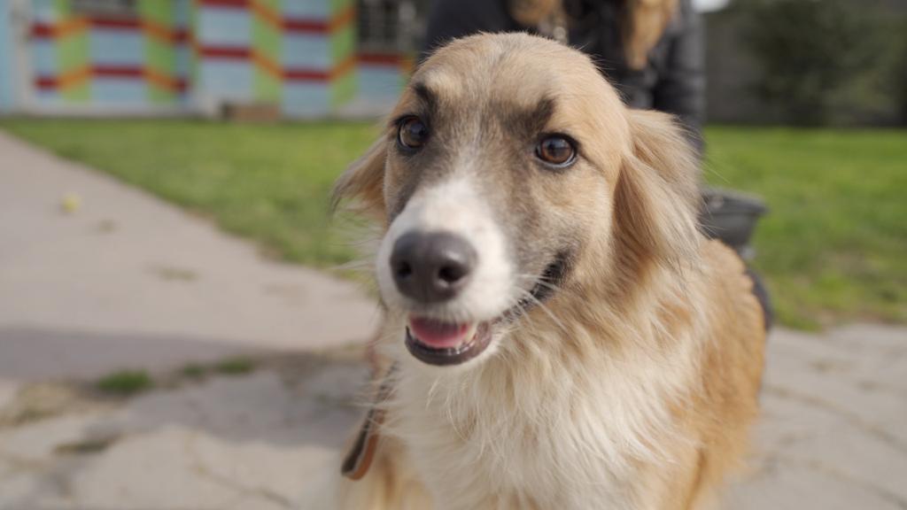 Rescatan 8 perros por abandono y maltrato animal