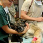 veterinario mascotas