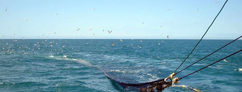 Anchoíta: Cuidados en una pesquería certificada